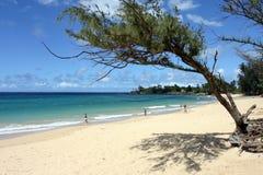 Praia quadro por uma árvore Fotografia de Stock Royalty Free
