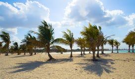 Praia quieta com sombras das palmeiras na areia Imagens de Stock Royalty Free