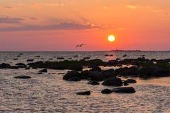 Praia rochosa do por do sol, mar calmo, céu alaranjado Kihnu, ilha pequena em Estônia Mar Báltico, Europa Fundo do ambiente natur imagem de stock royalty free