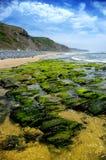 Praia selvagem Imagens de Stock