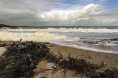 Praia selvagem Fotos de Stock Royalty Free