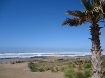 Praia selvagem, Casablanca, palma, céu puro, oceano azul Imagem de Stock Royalty Free