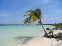 Praia selvagem com árvore de coco Imagens de Stock Royalty Free