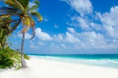 Praia selvagem em Tulum Fotografia de Stock Royalty Free