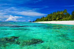 Praia snorkeling ideal com coral e palmeiras Foto de Stock