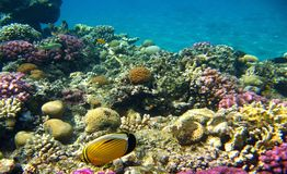 Praia subaquática Fotos de Stock Royalty Free