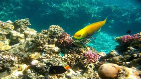 Praia subaquática Foto de Stock