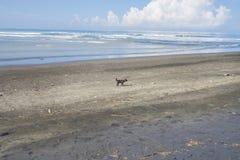 Praia suja, isolada no conceito da limpeza ambiental foto de stock