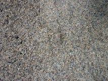 Praia transparente Costa Rica do caranguejo Fotos de Stock Royalty Free