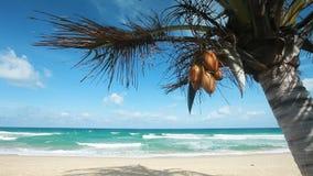 Praia tropical vídeos de arquivo