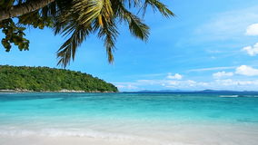 Praia tropical video estoque