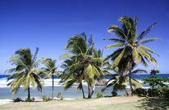 Praia tropical Foto de Stock