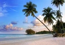 Praia tropical bonita com as palmeiras das silhuetas no por do sol fotos de stock