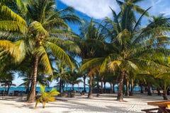 Praia tropical bonita com palmeiras do coco, Koh Rong islan Foto de Stock Royalty Free