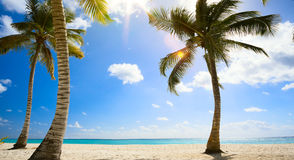Praia tropical bonita da arte no mar das caraíbas Imagens de Stock