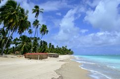 Praia tropical bonita em Brasil, Maragogi, Alagoas, Nordeste fotos de stock