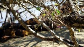 A praia tropical calma fotografia de stock