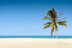 Praia tropical com árvore de coco Imagens de Stock Royalty Free