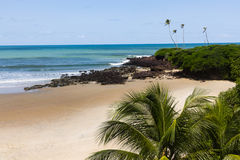 Praia tropical com areia e palmtrees fotos de stock