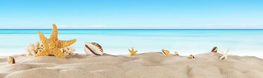 Praia tropical com a estrela de mar na areia, fundo das férias de verão