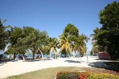 Praia tropical com mar azul, o céu azul e as palmas foto de stock royalty free
