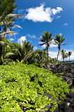 Praia tropical com opiniões de oceano Fotos de Stock Royalty Free