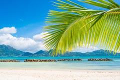 Praia tropical com palma Fotos de Stock Royalty Free