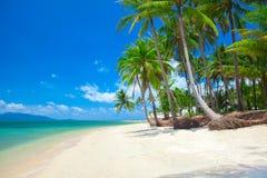 Praia tropical com palma de coco imagem de stock royalty free