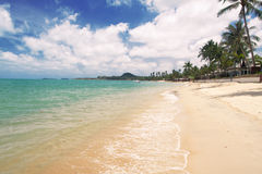 Praia tropical com palma de coco fotografia de stock