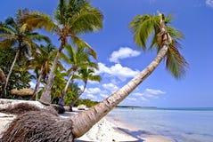 Praia tropical com palmeira Fotos de Stock Royalty Free