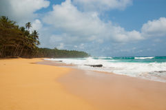 Praia tropical com palmeiras e o mar pesado Imagem de Stock Royalty Free