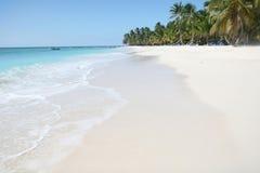 Praia tropical com palmeiras, oceano Imagem de Stock