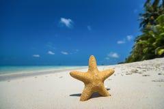 Praia tropical com uma estrela do mar na areia, na opinião do mar e na areia Imagem de Stock Royalty Free