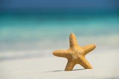 Praia tropical com uma estrela do mar na areia, na opinião do mar e na areia Imagem de Stock