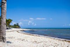 Praia tropical da recompensa em um dia de verão quente com oceano azul imagens de stock