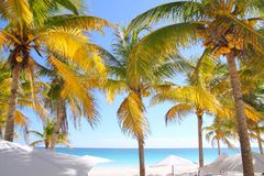 Praia tropical do Cararibe das palmeiras do coco Imagens de Stock