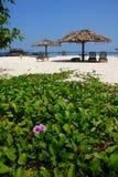 Praia tropical do console imagem de stock