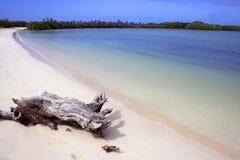 Praia tropical do paraíso Fotografia de Stock Royalty Free
