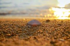 Praia tropical do por do sol Fundo bonito foto de stock
