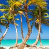 Praia tropical Fundo do oceano e dos palmtrees Areia branca fotografia de stock