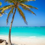 Praia tropical Fundo do oceano e dos palmtrees Areia branca fotografia de stock royalty free
