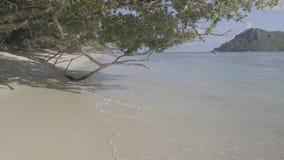 A praia tropical idílico, o mar acena o rolo no Sandy Beach sob as árvores tropicais, não comprimidas, o log 4K não editado com e vídeos de arquivo
