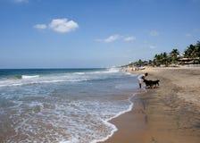 Praia tropical - Langkawi Fotografia de Stock Royalty Free