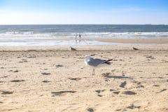 Praia vazia no por do sol Areia e mar amarelos Vista romântica foto de stock royalty free