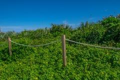 Praia Vegetation4 Fotografia de Stock