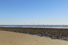 Praia Ventura CA Fotos de Stock Royalty Free