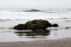 Praia verde de Moss Covered Rock Low Tide Califórnia do norte Imagem de Stock