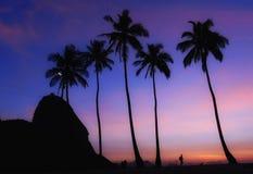 Praia Vermelha Urca RJ de Coqueiros Foto de Stock Royalty Free