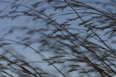 Praire grass 2 Stock Images