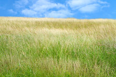 Prairie Stock Images